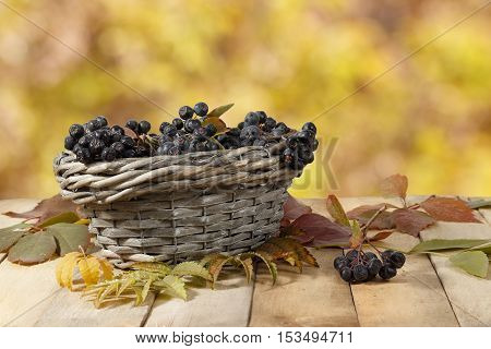 Aronia (chokeberry) in a wicker basket on a wooden table on a background of yellow leaves