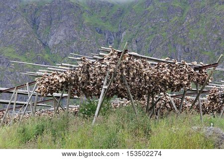 Fish Drying In Norway