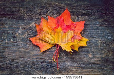 Autumn background with colorful fall maple leaves on rustic wooden table with place for text. Thanksgiving autumn holidays background concept. Yellow and orange autumn leaves. Copy space. Top view.