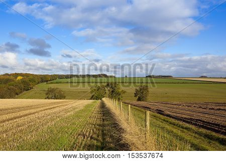 Agricultural Countryside
