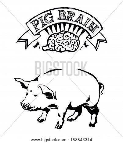 Pig brain hand drawn illustration. Art and conceptual metaphor poster