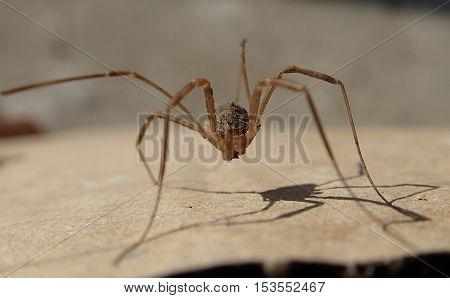 Arachnid with long legs  waiting alone on a cardboard