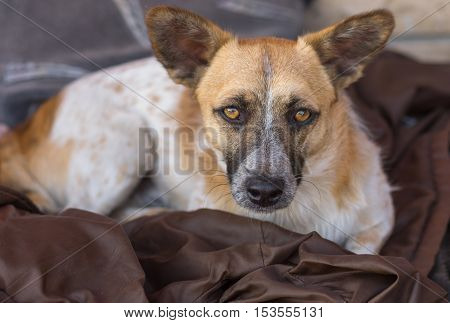Portrait of cute stray dog with intent look that implores - Adopt me please