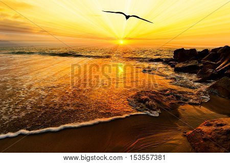 Bird silhouette flying ocean sunset sun rays is a silhouetted bird spreading its wings moving towards the light of the sun rays on the ocean horizon.