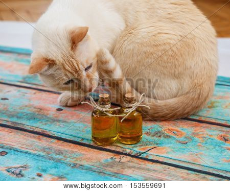 Red Cat And Olive Oil In Small Bottles