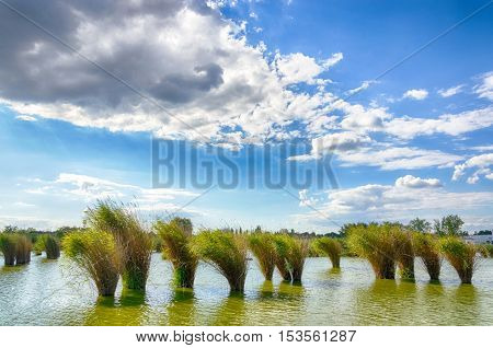 Lake Bujtosi in Nyiregyhaza, Hungary. Cloudy blue sky and green reed in the water. Windy weather. Summer season landscape.
