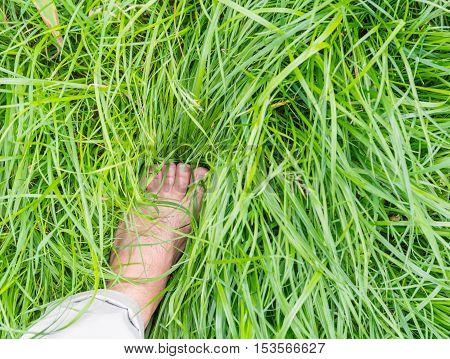 bare feet in green grass. The high uncut grass.