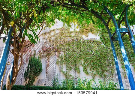 climbing plant arch with view on a wall with vintage style climbing supports covered with tendrils
