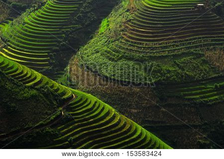 Terraced rice field of Mu Cang Chai Yenbai Vietnam