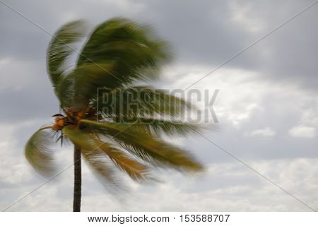 Image of a blurry palm tree in the storm