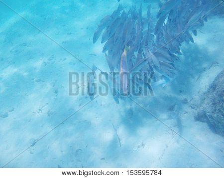 Fish In Caribbean Sea