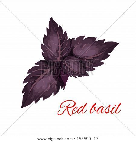 Red basil herb leaves isolated icon. Vector emblem of red basil herb dressing culinary spice and cooking ingredient for decoration, package design element, sticker, label