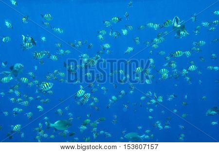 Many sea of small fish in the sunlight