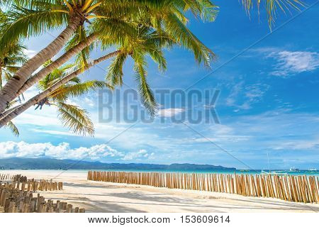 Beautiful palm tree over white sandy tropical beach. Sea and Boracay island in the background. Summer nature view.