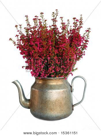 Bunch of heather in vintage metal pot, isolated