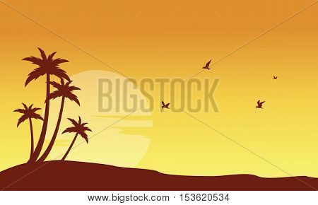 Silhouette of palm and bird at sunset scenery