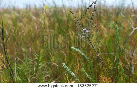 Dry branch with spiderweb on blurred nature background