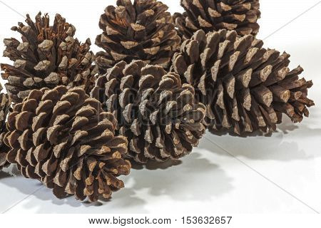 Six Natural Brown Pine Cone Patterns And Textures