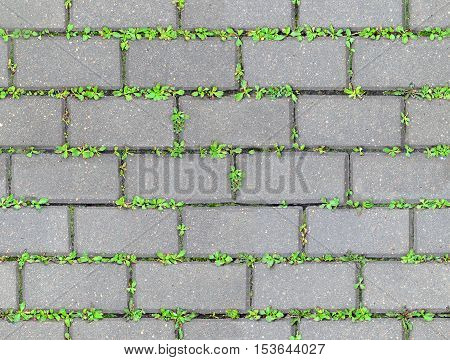 The gray wet concrete sidewalk coverage with sprouting green grass through the paving. Urban background seamless texture.