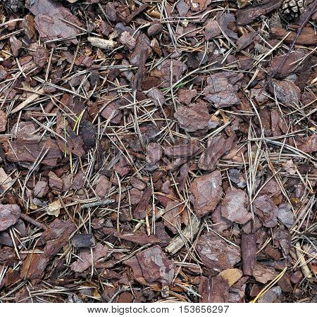 Pieces of pine bark on forest floor.