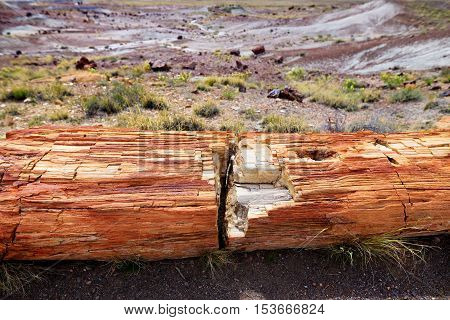 Stunning Petrified Wood In The Petrified Forest National Park, Arizona