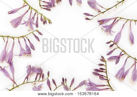 Frame with purple hosta flowers isolated on white background. Flat lay overhead view