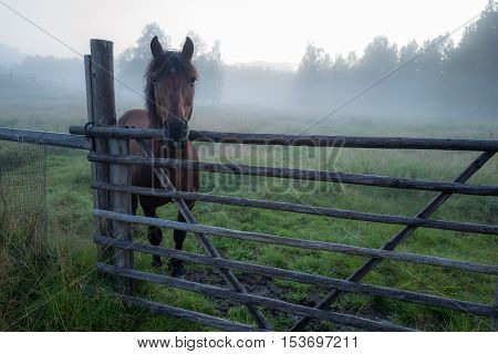 Beautiful horse is standing in foggy paddock