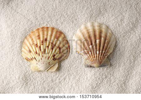 fotografia no estúdio de duas conchas sem moluscos sobre areia