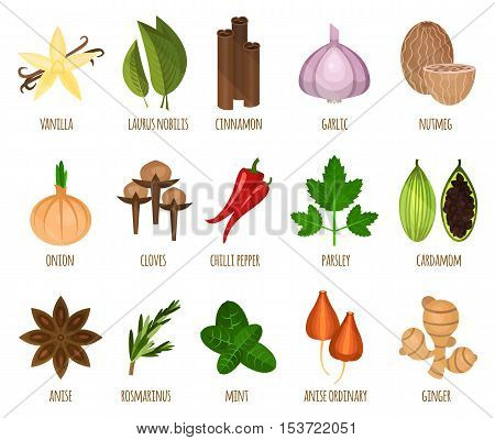 Herb seasoning and spice leaf food. Vanila and laurus nobilis, nutmeg and cinnamon, garlic and onion, chilli pepper and parsley, cardamom and ordinary anise. Cooking icons and restaurant or shop theme