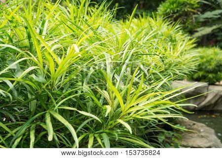 Green bush on stone, Green bush plant on the rock
