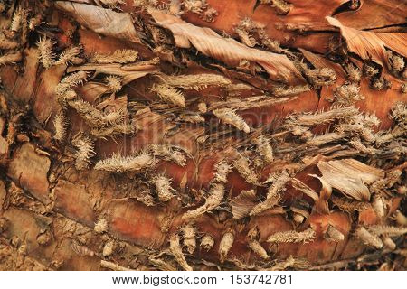Pictures of bark from palm tree, tropical gungles