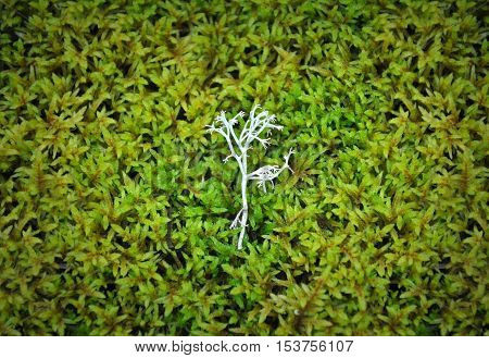Natural background. A sprig of white moss on a background of green moss.