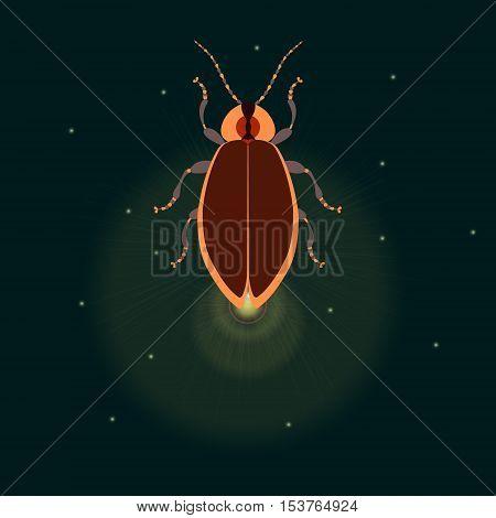 Firefly bug logo design template. vector illustration.