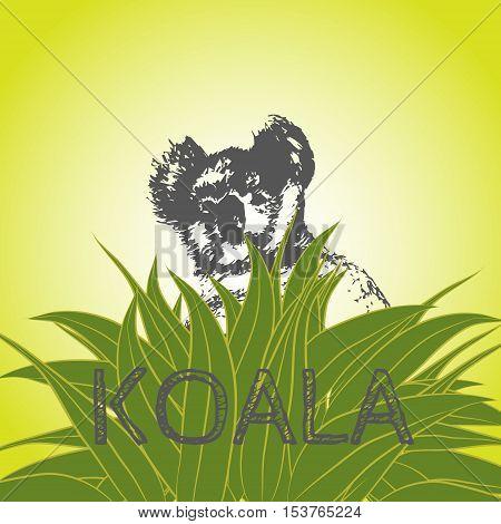 Vector illustration of a koala bear in eucalyptus leaves. Koala. Eucalyptus tree.