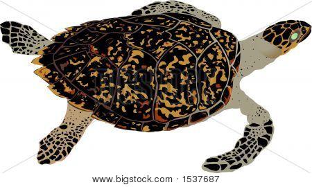 Hawksbill Turtle.Eps