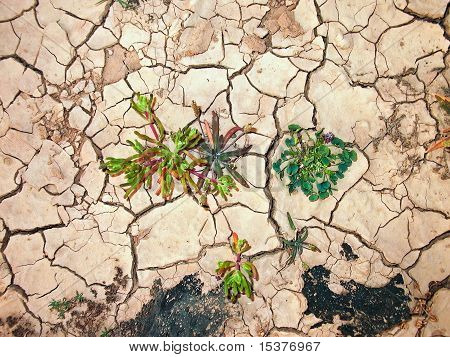Detail Of Dry Loam Earth