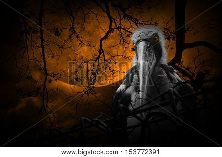 Lesser adjutant stork bird with old fence over dead tree moon and cloudy sky Mystery background Halloween concept