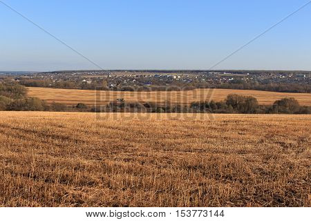 The Sloping Yellow Feld of Wheat. Landscape, Nature, Agriculture