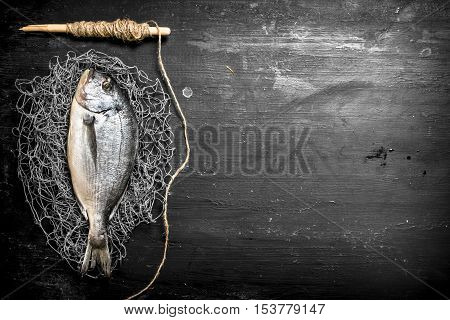 Fresh Sea Fish On A Fishing Net.