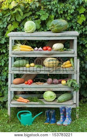 Fresh Organic Vegetables On Old Wooden Construction Ladder Outdoors. Children's Watering Can And Children's Rubber Boots On Grass Near Wooden Ladder With Vegetables Composition Of Vegetables On Wooden Ladder.