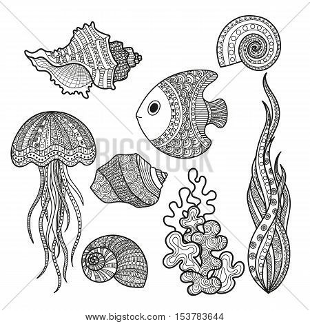 Vector illustration set of marine life fish, shell snail algae and corral coloring for adults. Underwater life of a coloring book, page black-and-white.