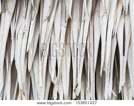 Dry palm leaves for background in nature.