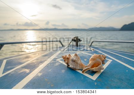 two sea shells on a boat in sunset