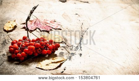 Rowan Berries And Autumn Leaves.