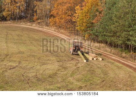 Tractor pulls the fallen tree. Working in the forest. Tractor is skidding cut trees out of the forest. Skidding timber.