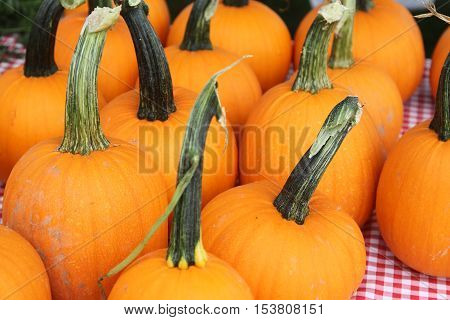 Display of orange pumpkins with stems on a table