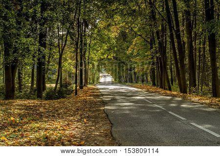 Trees Near The Road