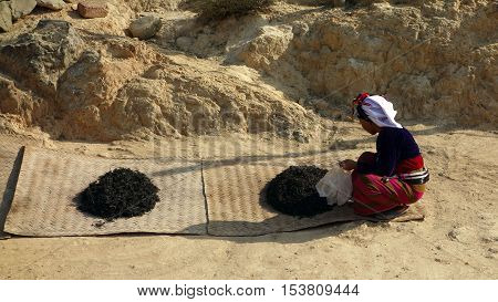 woman in native costume drying tea leaves in the sun