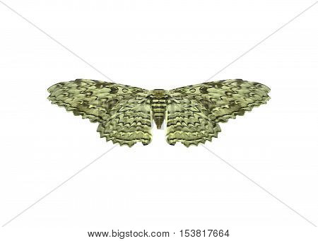 Top view photo of pale green moth with wings open isolated in white background.