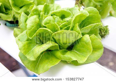 Organic Vegetable, Vegetable Food, Agriculture Organic Farm